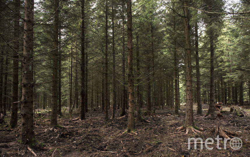 В Петербурге мужчина подорвался на мине в лесу. Фото Getty
