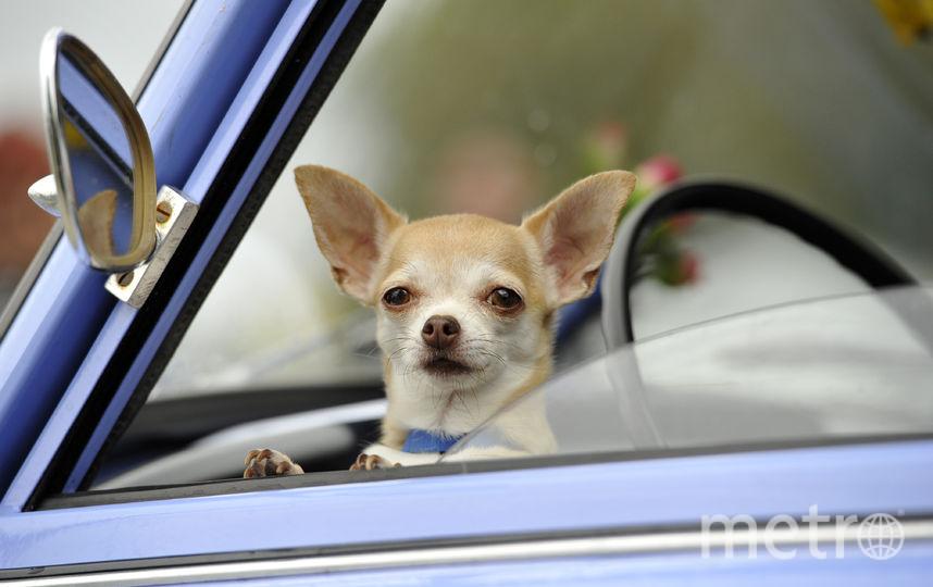 В дороге всегда должно быть комфортно. Важное условие – исправный автомобиль. Фото Getty