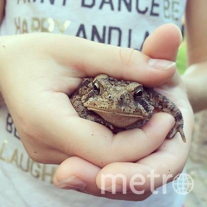Любой желающий сможет взять в руки жабу и перенести ее через дорогу, проходящую вдоль Сестрорецкого залива. Фото Getty