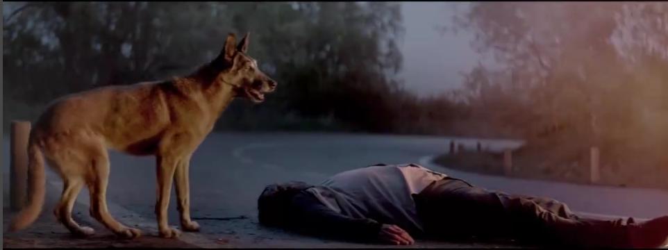 Видео о преданности животных растрогало пользователей Сети. Фото Скриншот , vk.com