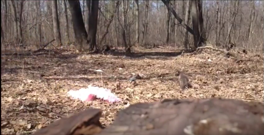 Мужчина вкостюме Мальвины обнародовал видео издевательств над кошкой
