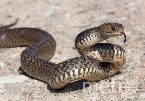 Российский путешественник перевозил с собой ядовитых ящериц, змей, тараканов. Фото Getty