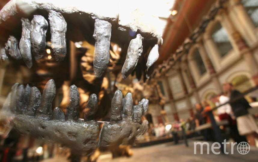 """Динозавры в """"полный размер"""" есть во многих музеях мира. Фото Getty"""