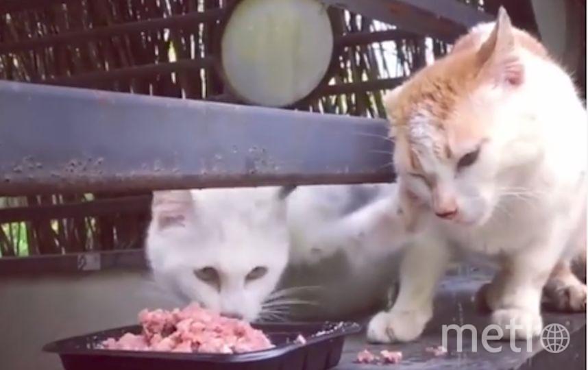 Кот-жадина. Фото Скриншот видео Facebook/Never-Seen-Videos