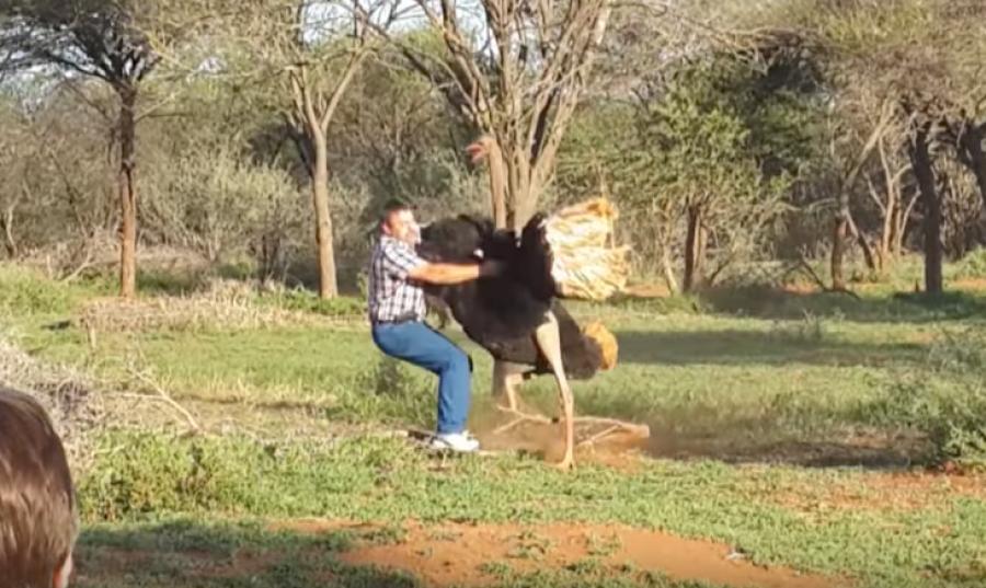 ВЮАР страус напал намужчину, пытавшегося его обнять