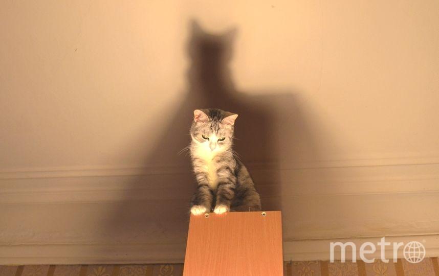 Моя кошка-Яша,да-да,Яша,она -девочка,ей 5 лет.Любит покорять высоты.