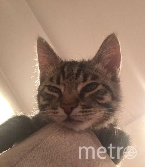 Один из двух наших любимых котов. Его зовут Мурик. Назвали так потому,что он очень любит мурчать и мяукать, так разговаривает с нами. И любит сверху наблюдать за тем,что происходит в комнате. Меня зовут Ирина Николаевна. 60 лет.