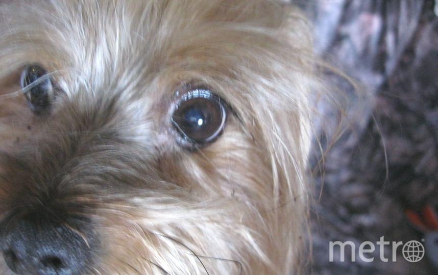 Меня зовут Пижон Анатольевич. Я родился 8 марта 2006 года, в год собаки. Я очень умный и милый, меня все любят. Моя хозяйка: Лена, 31 год.