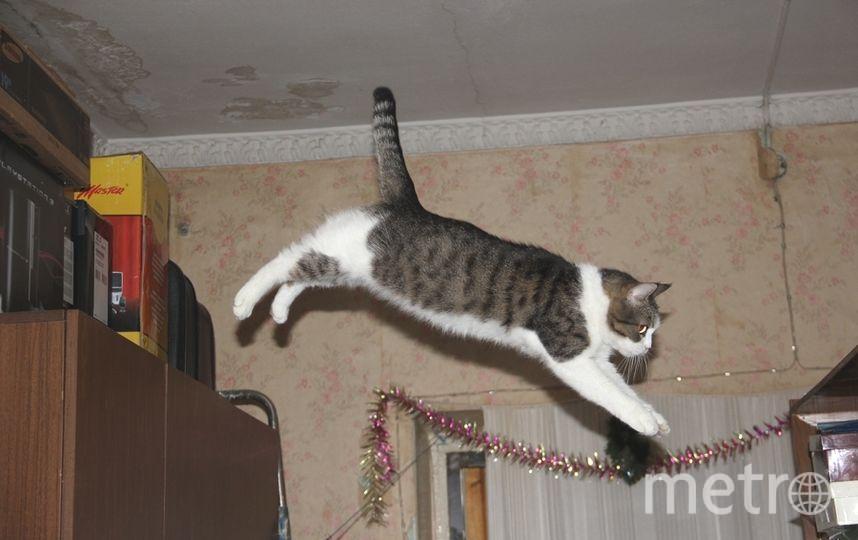 Это моя кошка Мурка, которая любила прыгать со шкафа на шкаф. Сейчас она уже старая и теперь только спит.. Фото Дмитрий Зезенков.