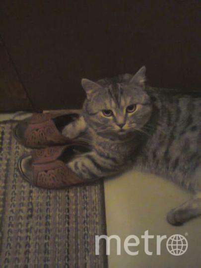 Это наш любимец Барсик! Он очень важный и подвижный кот! На фото он примеряет домашнюю обувь! Денис Шинковой 44 года.