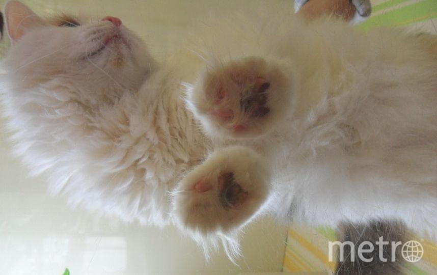 Кошка Пуся в недоумении - с такого ракурса ее еще не фотографировали. Фото Елена Жукова.