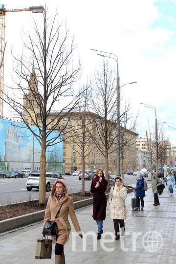 Липы на Тверской. Фото Василий Кузьмичёнок