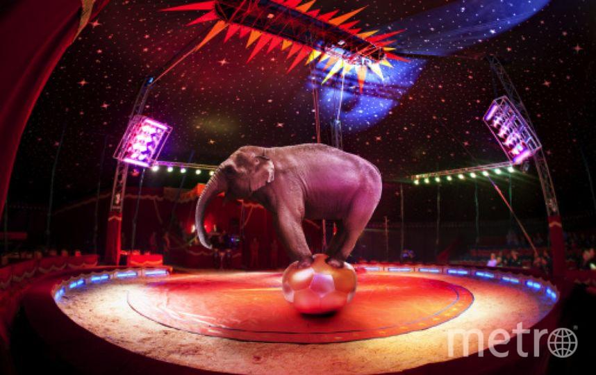Петербургский цирк оштрафовали на 200 тысяч рублей. Фото Getty