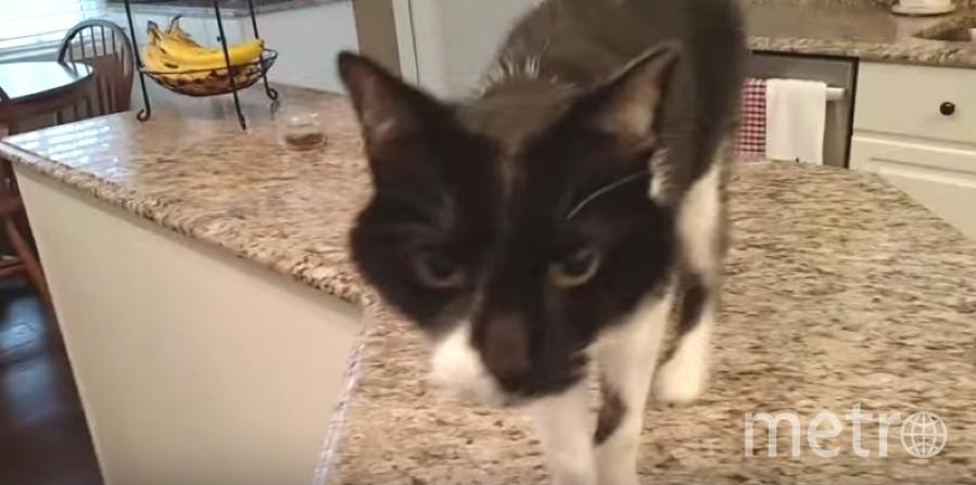 Милый черно-белый кот по кличке Джек. Фото Скриншот Youtube
