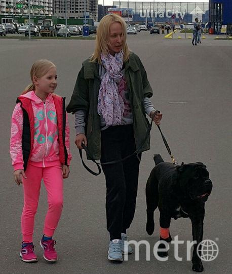Собаку, которую хозяин избил за непослушание, отправили в гостиницу для животных.
