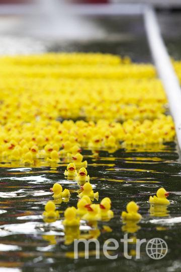 Массовый заплыв уток. Фото Виктория Вон.