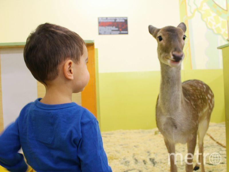 Вокруг контактных зоопарков кипят страсти | предоставлено Милой Спотарь.