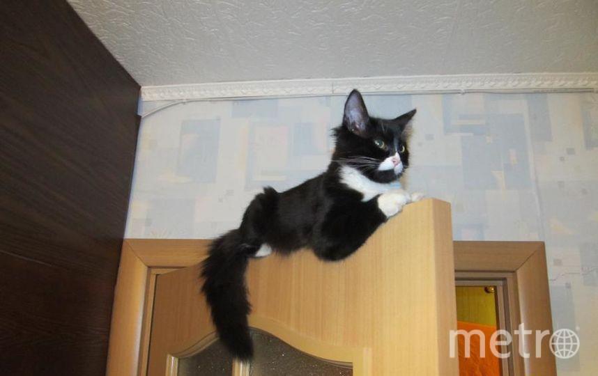 Это наша Batcat Тинка, она страж порядка и спокойствия в нашем доме. Она часто сидит на своем посту и бдит. Хозяйка кошки Солдатова Марина, 22 года.