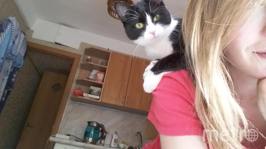 Моя самая любимая кошка Килька,умная и безумно оасковая. Всегда сидит у меня на шее)во всех смыслах. Фото Евгения