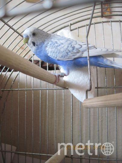 Это наш любимый попугай - Гоша. Он очень общительный, но всего боится. Никифорова Марина и Дмитриева Света.