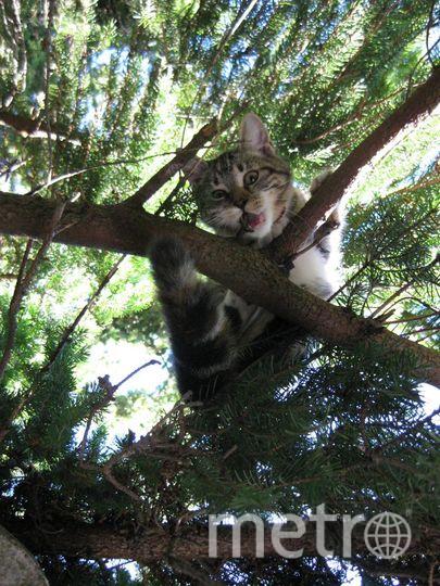 """Феличка, 2,1 года. Любит проводить летние каникулы на даче, охотится на мышей и птиц, и обожает """"летать"""" по деревьям. Фото Михаил, 36 лет"""
