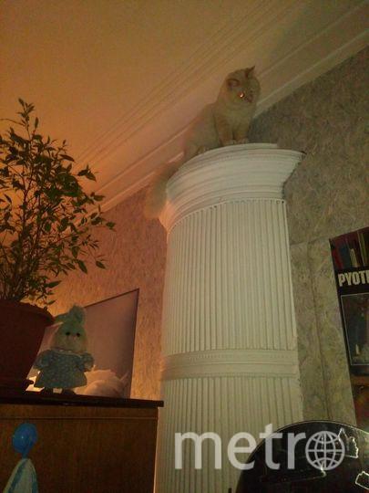 Наш пушистый любимец - Коксик, с высоты наблюдает за происходящим. Комнатный надзиратель.