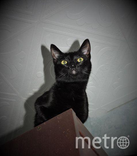 Наша добрейшая Фокси снизу выглядит страшным чудовищем. Ей всего 1.5 года и она не устает познавать этот мир. Оксана, 35 лет.