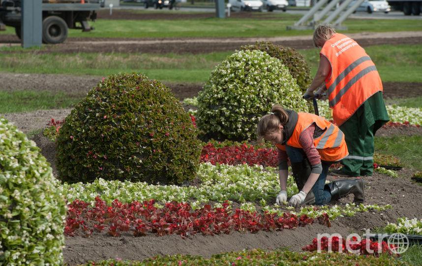 ВПетербурге появился цветник с огромным футбольным мячом вцветах триколора