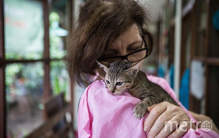 В Ирландии открылась вакансия обнимателя котиков. Фото Getty