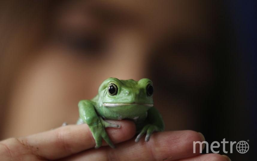 Лягушка. Фото Getty