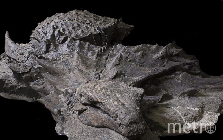 """""""Мумия"""" динозавра. Фото ALBERTA CULTURE AND TOURISM"""