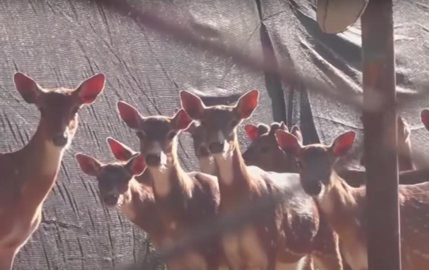 Кадры из аргентинского зоопарка. Фото Скриншот Youtube