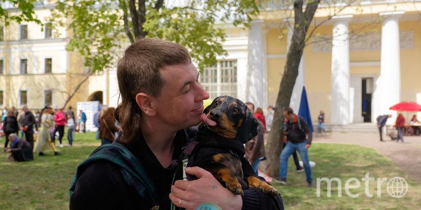 Парад такс в Петербурге.