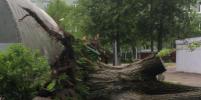 Число жертв урагана в Москве и Подмосковье выросло до 16