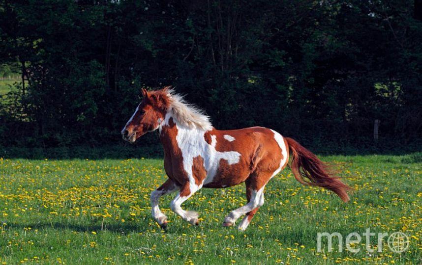 Пони. Фото Getty