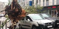 Собянин дал двое суток на ликвидацию последствий урагана в Москве