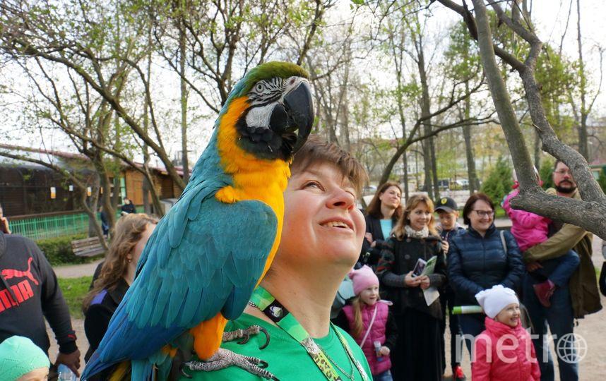В День защиты детей в зоопарке можно погулять с ручным попугаем. Фото http://spbzoo.ru