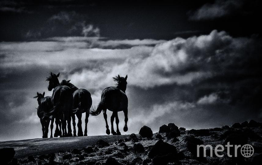 Остров Пасхи. Фото Елена Гонтаренко.