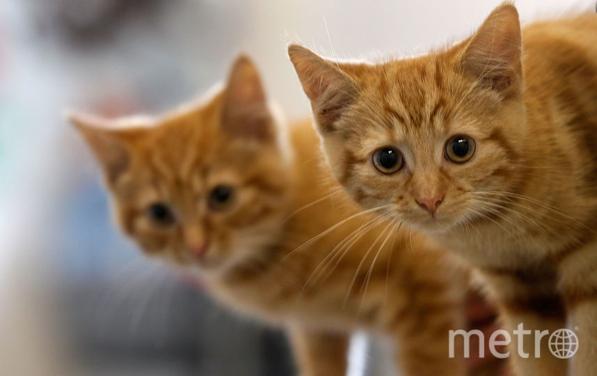 Живодер умертвил неменее 200 кошек наюге Франции