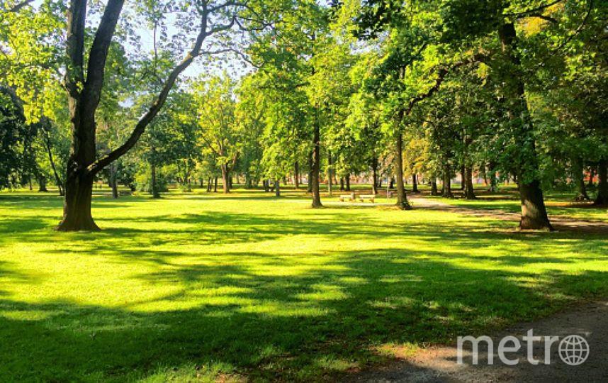 В парке Малиновка появится церковь. Фото assembly.spb.ru, Getty