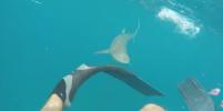 Американец записал на видео нападение рифовой акулы