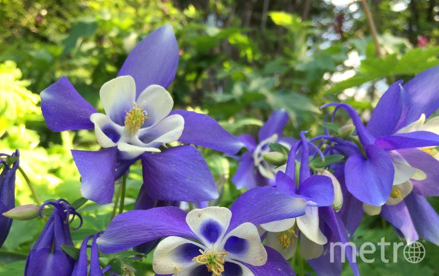 2-ой цветок наибольшей кувшинки вмире увидели гости «Аптекарского огорода»