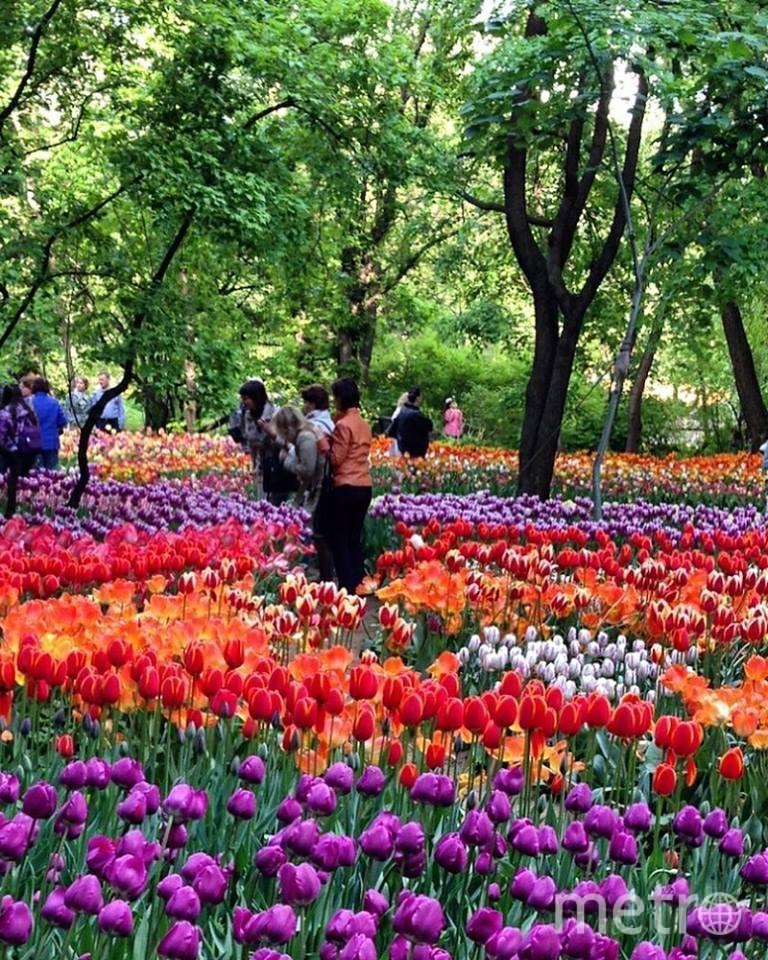 """Тюльпаны в """"Аптекарском огороде"""". Фото www.facebook.com/aptekarsky.ogorod"""