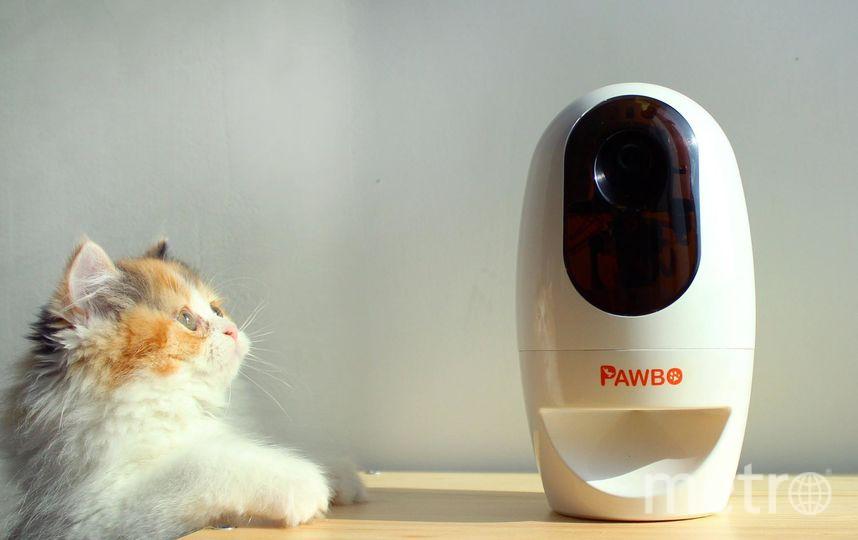 "PawBo. Фото ""Metro"""