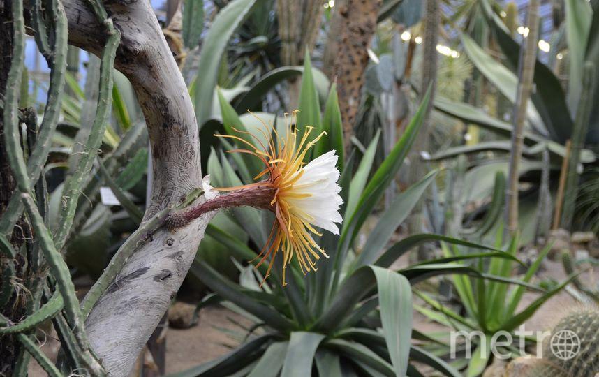 Ботанический сад vk.com/botsad_spb. Фото vk.com