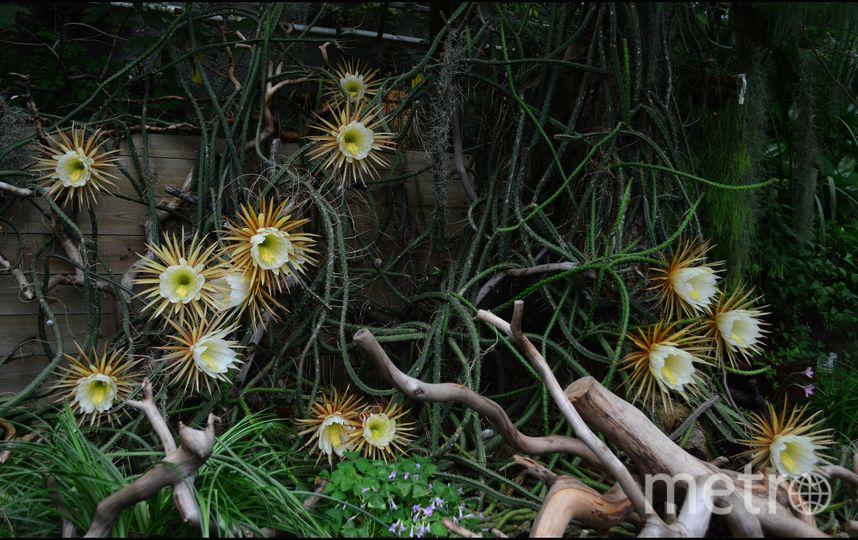 Ботанический сад vk.com/botsad_spb. Фото Светлана Алфёрова, vk.com