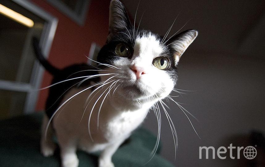 Предугадать настроение и намерения кошки можно по движению хвостом. Фото Getty
