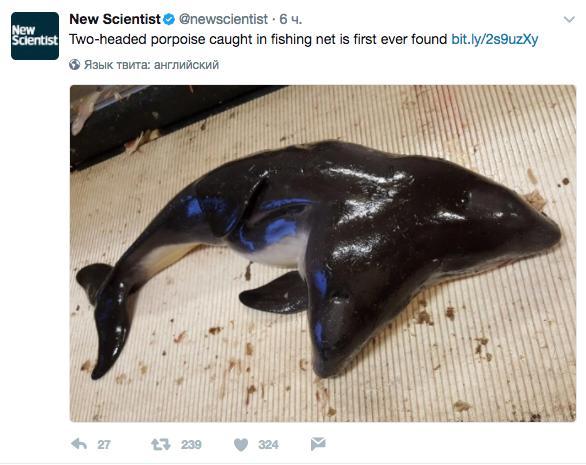 Скриншот twitter.com/newscientist.
