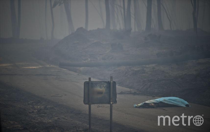 Пожар в Португалии. Фото AFP