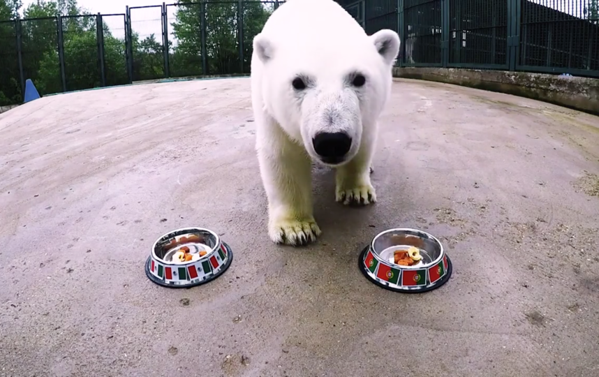 Белая медведица Ника. Фото Скриншот Youtube